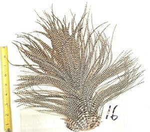 GRIZZLY ROOSTER SADDLE HACKLE LONG THIN DRY FLY TYING CRAFT HAIR FEATHERS #16
