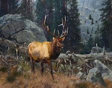 Rungius Carl Bull Elk High Country Print 11 x 14  14   #4300