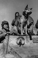 WW2 Picture Photo Russia 1943 Crew of a BA-10 armored car with military dog 1463