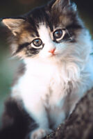 Adorable Kitten Sitting In Tree Branch Animal Portrait Photo Poster 12x18