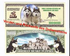 dollarschein   A Siberian Husky