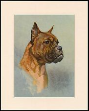BOXER OLD STYLE DOG HEAD STUDY LOVELY PRINT MOUNTED READY TO FRAME