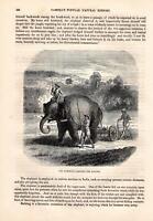 Indischer Elefant Arbeitselefant Elefanten HOLZSTICH von 1866 ELEPHANT