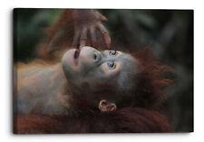 Wildlife Mammal Monkey Primate Ape Cute Canvas Wall Art Picture Home Decora.