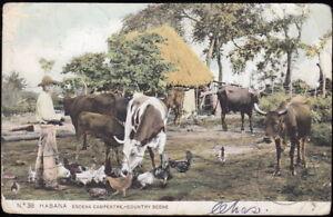 Cuba, Habana ~ Escena Campestre / Country Scene ~ UDB Tarjeta Postal mailed 1908