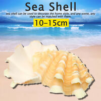 Large 13-15cm Natural Marine Shell Tridacna Clam Conch Home Ornament Giant Sea