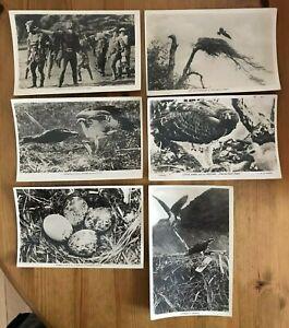 RP Postcard Bundle x 6 Bird & Falconry Interest, Osprey, Martial Hawk Eagle etc