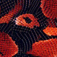 Hydro Dipping Diamond Back Snake Skin AP-938-A Hydrographic Film Water Transfer Printing Film