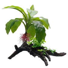 """Hagen Fluval STRIPED ANUBIAS  ON ROOT 13.5"""" Decorative Plant Fish Aquarium"""