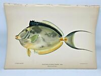 Antique Lithographic Print Reef Fishes Hawaiian Islands Bien 1903 Plate 60