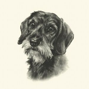 Dog Show Ring Number Clip Pin Breed - Dachshund Wire-Haired