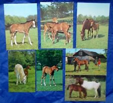 Horse & Pony Mare & Foal Postcard Collection job lot bundle of 7 1970s & 1980s