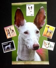 Ibizan Hound, Collectable - DIY Collage - Vintage Print