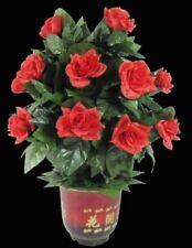 Magic Blooming Rosebush