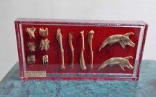 La casa de muñecas en miniatura de Museo/historia dinosaurio huesos en caso de pequeño