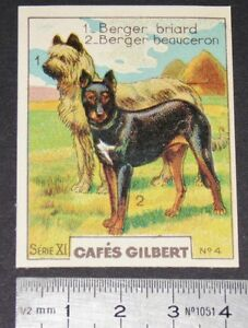 CHROMO 1936 CAFES GILBERT RACES DE CHIENS BERGER BRIARD BEAUCERON DOGS HUNDE