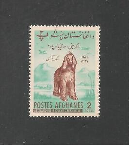 Afghanistan #566 (A189) VF MNH - 1962 2p Afghan Hound Dog