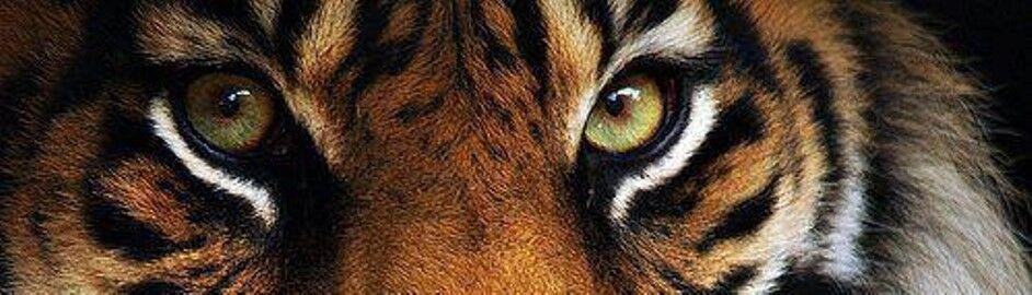 Wonderful World of Barefoot Tiger