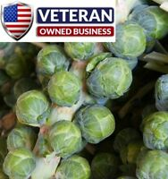 Brussels Sprout seeds Long Island Improved 500+ seeds Non-GMO and Heirloom seeds