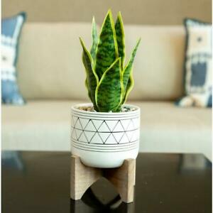 12.5 in. Faux Snake Plant in White Dimple Pattern Ceramic Pot on Wood Stand