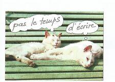 POSTCARD CATS , CHATS , COLLECTION AS DE COEUR