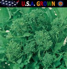 Broccoli Raab 250 Seeds Certified Organic Rapini Non-Gmo Heirloom Gardening
