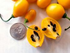 ROCOTO MINI pure seeds
