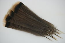 12 #1 ADULT RIO-GRANDE WILD TURKEY TAIL FEATHERS/ FLY-TYING