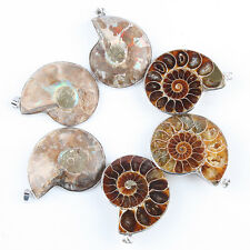 1Pc Natural Nautilus Ammonite Fossil Gemstone Slice Pendant Charms Fit Necklace