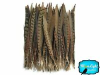 """Pheasant Feathers, 10-12"""" Natural Ringneck Pheasant Tail Feathers - 10 Pieces"""