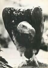 Postcard Animals eagle bird fly head eye beak