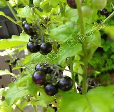 Solanum guineense, Hei Tien Tsai, 20 Samen