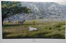 Larry Dyke Ezekiel 34:15 Texas Landscape Hill Country Trees White Cattle Ltd Ed