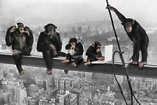 CHIMPS ON GIRDER - FUNNY POSTER - 24x36 SHRINK WRAPPED - MONKEY 22667