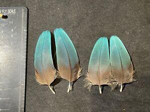 Gitana Shannon Blacker macaw pairs - rare classic salmon fly tying feathers