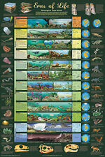 Eras of Life educational geological history chart poster print 24x36