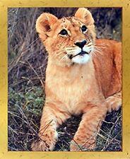 Lion Cub Big Cat Wild Animal Wall Decor Framed Picture Art Print (18x22)