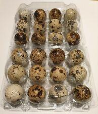 Quail Eggs 24 fresh