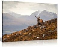 Wild Stag Scottish Highlands Canvas Wall Art Picture Print