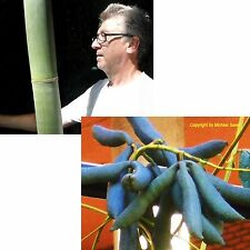Riesenbambus und die tolle Blaugurke sind zwei, die super in den Garten passen !