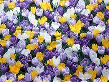 1 - 2 Metres Apparel - Dress Floral 100% Cotton Fabric