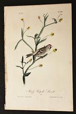 AUDUBON'S BIRDS of AMERICA - MEALY REDPOLL LINNET - First Edition Octavo Pl.178