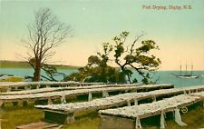 c1910 Postcard; Fish Drying on Tables, Digby Nova Scotia Canada unposted