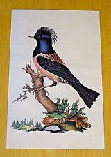 BRITISH LIBRARY BIRD POSTCARD ~ ROSE COLOURED OUZEL BY EDWARD DONOVAN, 1794-1819