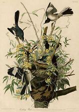 Vintage Birds Art Prints