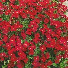 Aubrieta 'Royal Red' Appx 250 seeds - Rock Garden / Border - Perennials