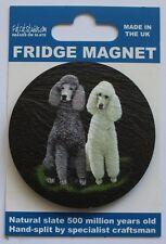 Poodle - Dog - Fridge Magnet - Welsh Slate