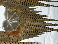 5 fanned pheasant tails feathers crafts fly tying native art flower arrangement