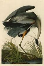 Great Blue Heron John James Audubon Wildlife Bird Nature Print Poster 19x13