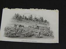Sheep, In Camp En Route to Winter Range, Arizona, c.1895 #86
